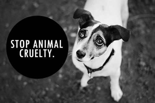 groups raise animal cruelty awareness